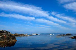 利尻島 ウニ漁がはじまる