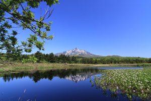 利尻島は自然ガイドと一緒に歩くと楽しさ倍増UP!